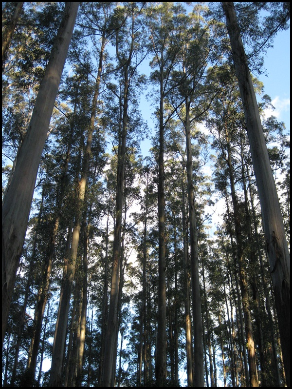 Roadtrip dans le Dandenong Ranges National Park