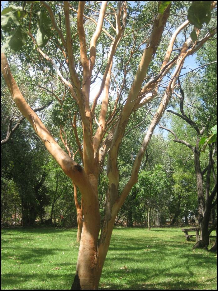 Nitmiluk National Park, Katherine Gorge, Outback, Australie