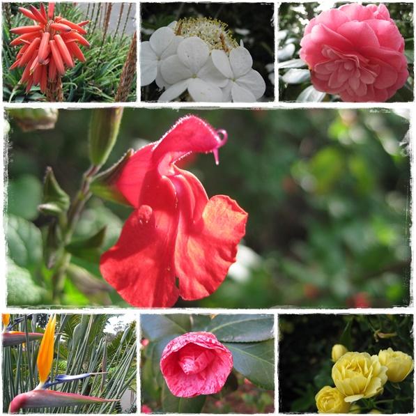 Jardins Botaniques Melbourne