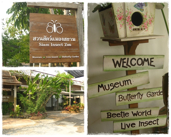 Siam Insect Zoo, Chiang Mai