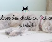 Caliner des chats au Cat Cafe à Ubud
