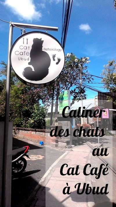Cat Cafe Ubud