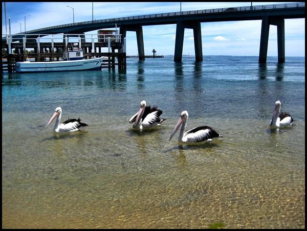 San Remo, Phillip Island, Victoria