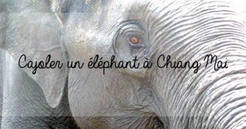 Cajoler un éléphant au nord de Chiang Mai