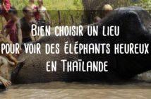 Voir des éléphants en Thaïlande refuge sanctuaire d'éléphants